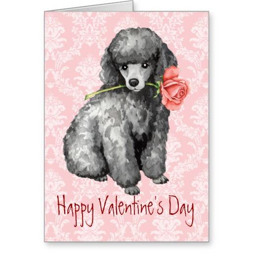 valentine_rose_miniature_poodle_greeting_card-r912fdf69910f40e7a5806d7f084edd16_xvuat_8byvr_512