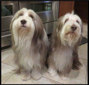 dogboys-web-610x585