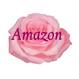 Amazon79